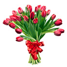 Order flowers to Poland: 25 Tulips Bouquet