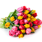 Order flowers to Poland: 30 Tulips Bouquet