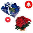 Order flowers to Poland: Christmas Poinsettia with Box of Chocolates