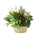 Order flowers to Poland: Green Garden Plants Arrangement (medium)