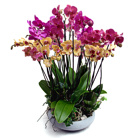 Order flowers to Poland: Magnificent Orchid Garden Arrangement