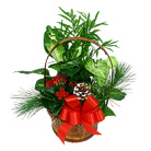 Order flowers to Poland: Green Garden Plants Arrangement (small)