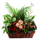 Order flowers to Poland: Green Garden Plants Arrangement (big)