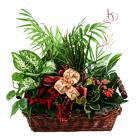 Zamów kwiaty do Polski: Kompozycja Zielony Ogród (duża)