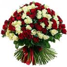 Zamów kwiaty do Polski: Bukiet 201 Długich Czerwonych i Białych Róż