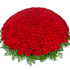 Order flowers to Poland: You Are the Best - 501 Roses Basket