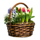 Order flowers to Poland: Oh it's Spring! Arrangement